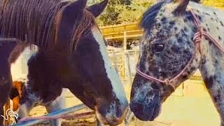 Blind Horse Loves The World Her Mom Gave Her