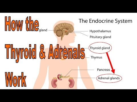How to heal your thyroid and adrenals