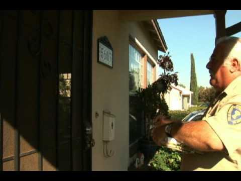 Spinosad Treatment for Exotic Fruit Fly Eradication