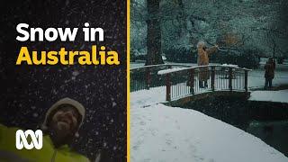 Heavy snowfall during Antarctic blast, Australia 2021 | ABC Australia