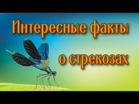 Насекомые Всё про стрекозу