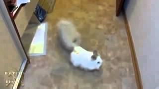 Похищение кролика(прически стрижки прически прически фото прически годов новые прически прически на новый прически на новый..., 2015-06-06T16:47:21.000Z)