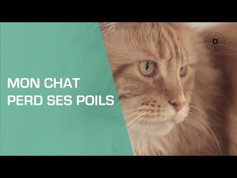Mon Chat Perd Ses Poils : Que Faire ? - Animaux