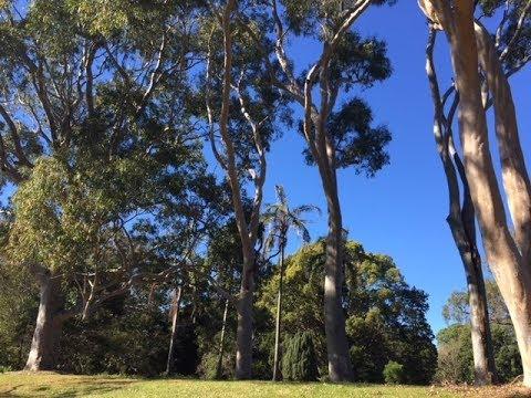 Acknowledgement of Country - #CroakeyGO Sydney
