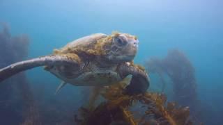Seals & Turtles in La Jolla!