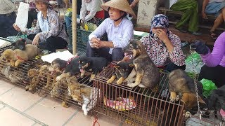 Khám phá phiên chợ bán chó mèo cảnh lớn nhất Việt Nam