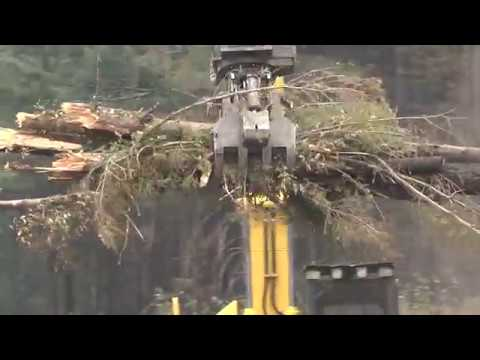 ODOT works to clear trees from I-84 and Historic Columbia River Highway