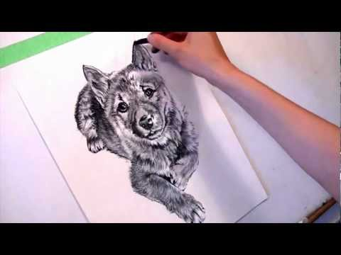 Draw My Pets: Shiba Inu