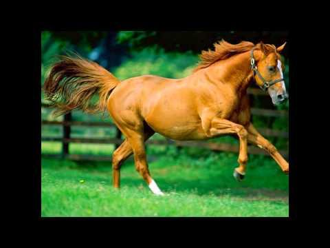 Characteristics of Healthy Horses - YouTube