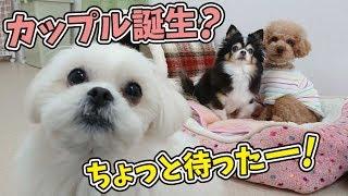 バノくん『ちょっと待ったー!』 犬のひみつきちホームページ:http://w...