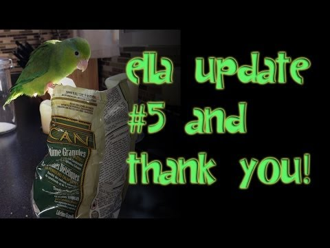 Pacific Parrotlet Ella Health Update #5 & Thank You