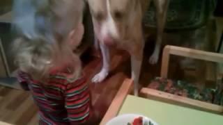 Ребенок кормит собаку