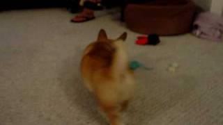 Bailey The Corgi And Lulu The Pug