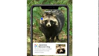 Search what you see with Google Lens