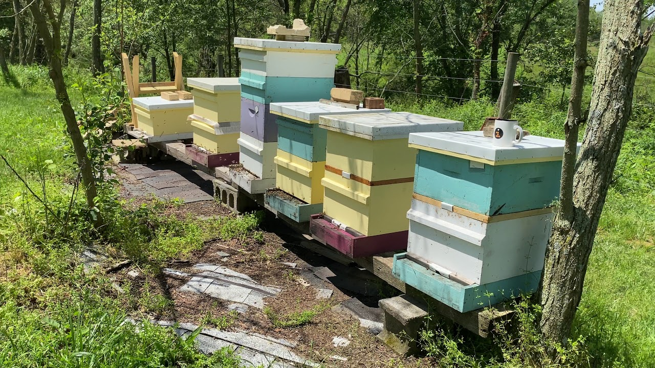 A quick walk-through of a friends colorful apiary