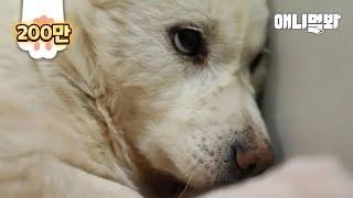 세상에서 사람이 가장 싫은 강아지 '슬아'ㅣDog Protected Her Dead Puppy Even When Her Life Was At Risk..
