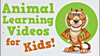 Animal Learning Videos for Kids | Tigers, Horses and More!
