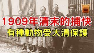 1909年清朝末期的捕快,這種動物受大清律法保護!