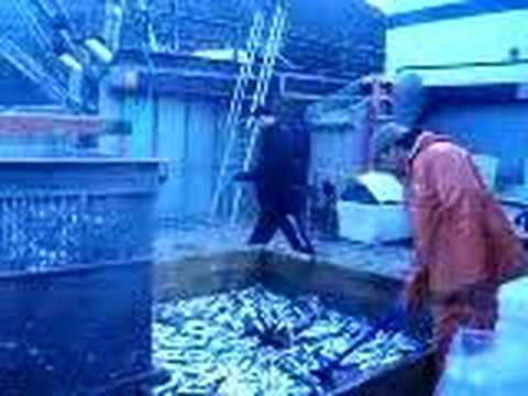 Herring Tendering in Sitka, Alaska