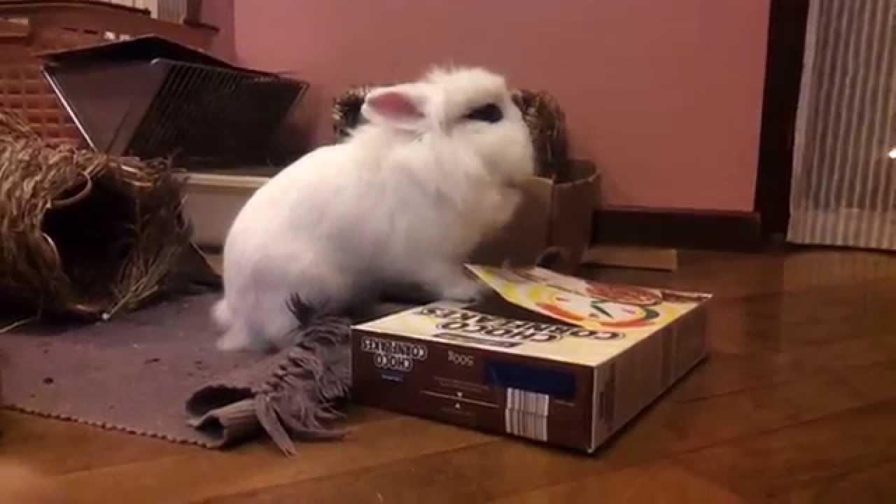 Giochi in scatola per conigli 2 youtube for Impermeabile per cani fai da te