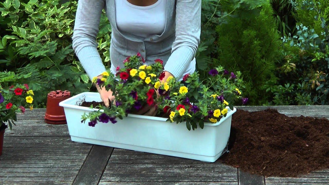 03 Cultiva una jardinera con plantas anuales YouTube