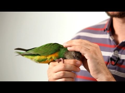 How to Pet a Parrot | Parrot Training