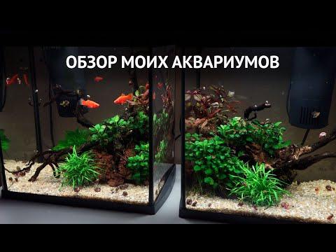 Обзор моих аквариумов