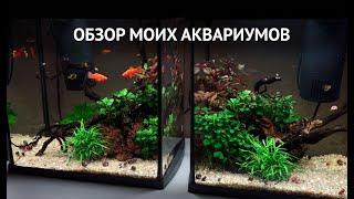 обзор моих аквариумов!