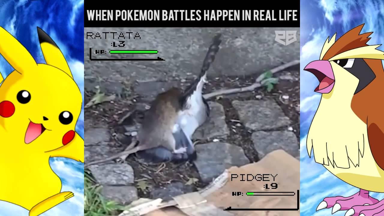 Real Life Pokemon Battle Images