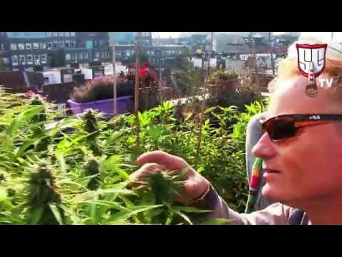 From IBM Suit to Cannabis Grower - The Story Behind Soma Seeds - Smokers Guide TV Amsterdam
