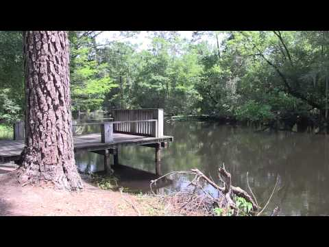 Carolina Rivers: The Lumber River - Looks Like Sweet Tea (vignette)