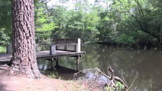 Carolina Rivers: The Lumber River - Looks Like Sweet Tea (vignette)