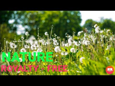 16 Beutiful Nature Stock Footage Royalty free No Copyright Free Download #royaltyfree..