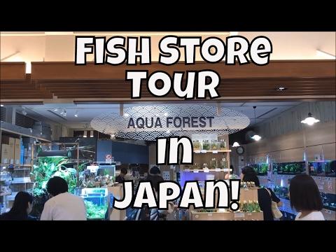 Japanese Fish Store Tour Aqua Forest Sumida Fish store tour in Japan Aqua Forest ADA Fish Store