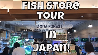 Japanese Fish Store Tour Aqua Forest Sumida Fish store tour in Japan Aqua Forest ADA Fish Store
