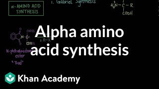 Alpha Amino Acid Synthesis