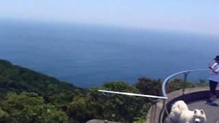 九州最東端の鶴御埼へ現れたサモエドさんごまる