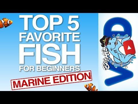 Top 5 Saltwater Fish For Beginners | BigAlsPets.com