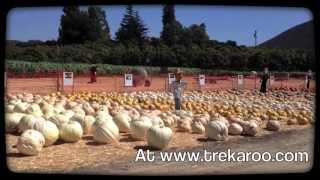 Trekaroo - Underwood Farms, Moorpark, CA Pumpkin Patch