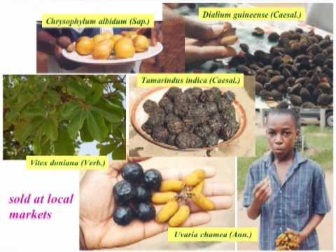 Ethnobotany and Conservation in West Africa