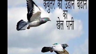 Bird Pigeon the high fly Formula ( khel pani ) part 1 by Aman Prabhakar