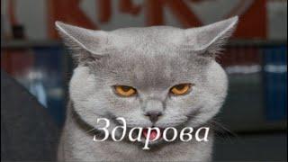 Bzрываю Рулетky 💥💥💥 Зашел не вышел