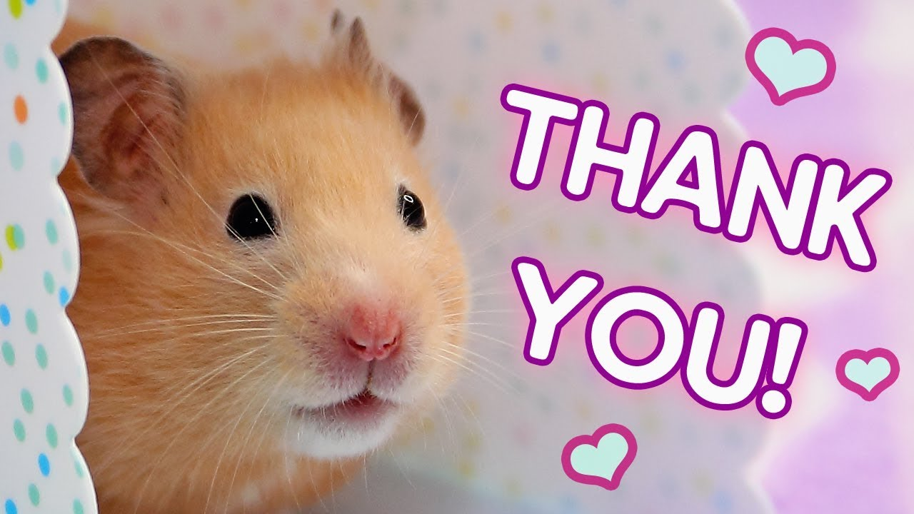 💖 Thank You So Much! 💖