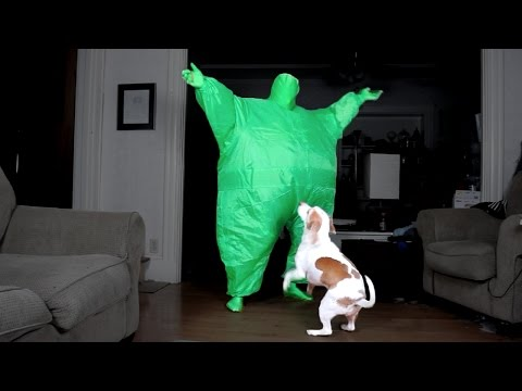 Dog Dances w/Man in Chub Suit: Funny Dog Maymo