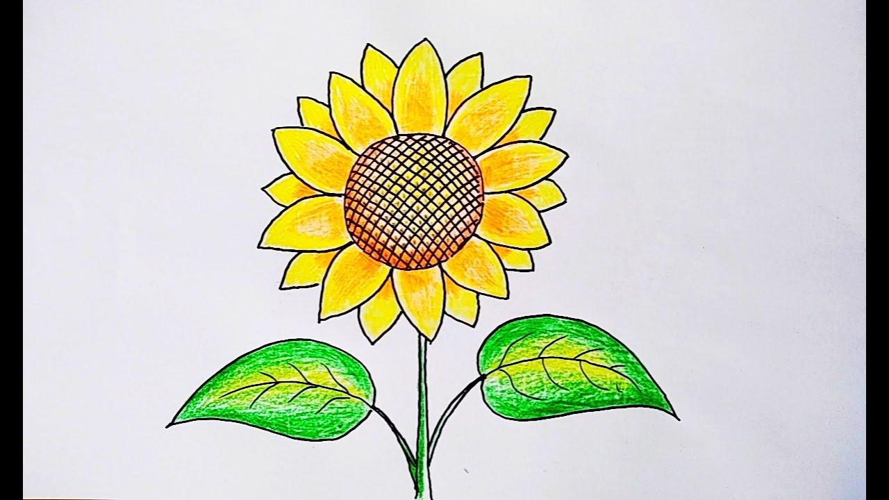 Mewarnai Gambar Bunga Matahari Sekali