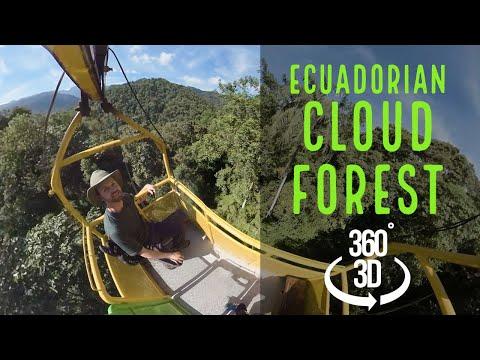 Ecuadorian Cloud Forest in 360 VR!! (2018)