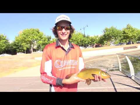 Suburban Tench Fishing! - Oz Fish TV