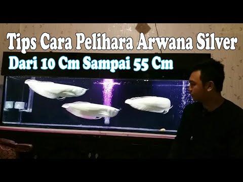 TIPS CARA MERAWAT