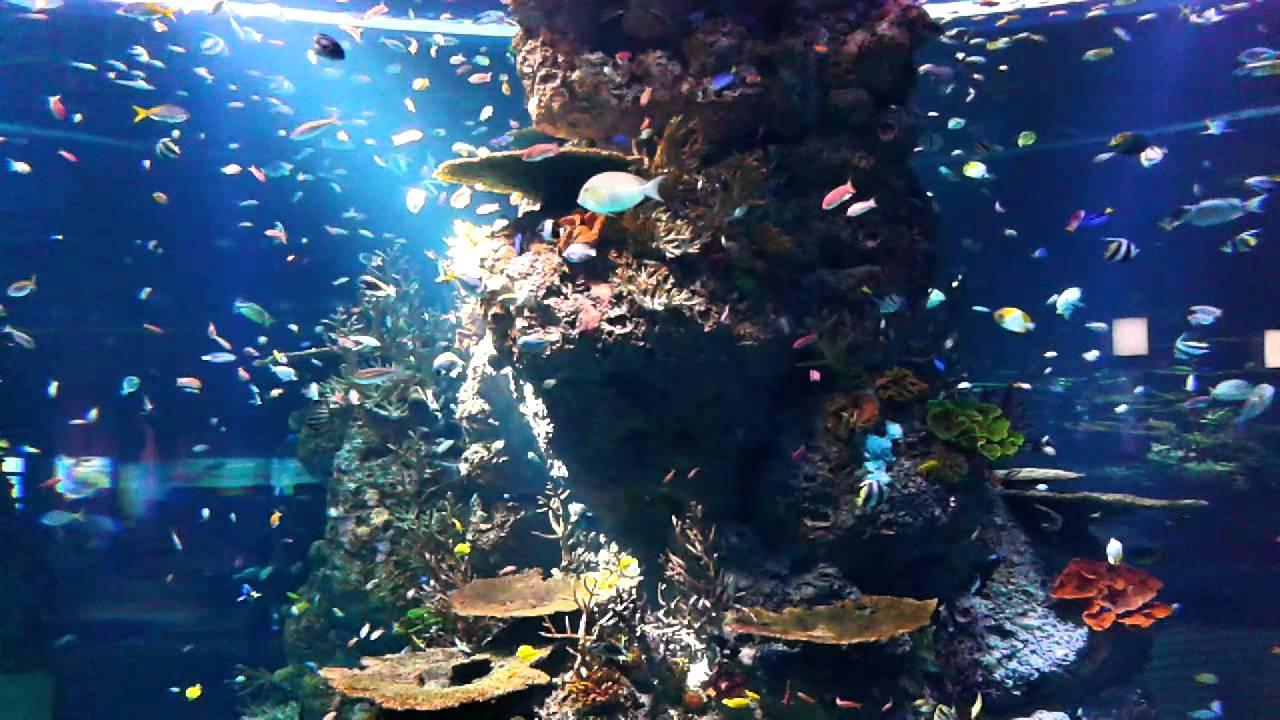 Aquarium fish tank singapore - Giant Fish Tank S E A Aquarium Singapore