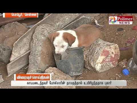 Perambur : Man was killed for feeding Biryani to a dog | Polimer News
